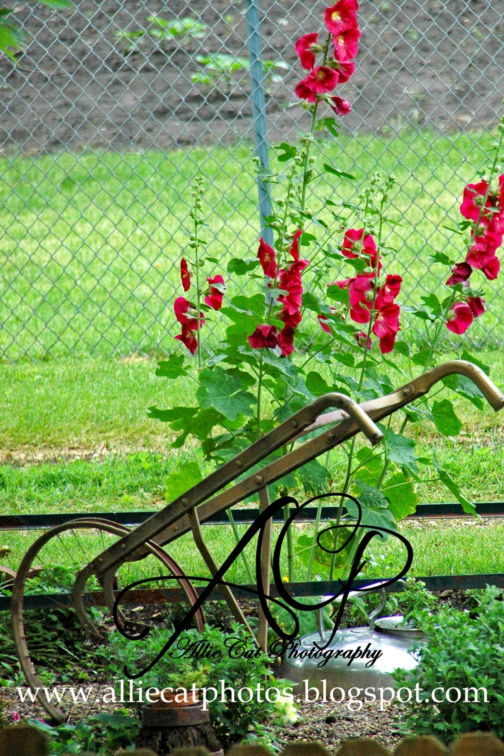 Flowers in cast iron bed, in old creamer, antique wagon wheel planter, old hand plow--I love using old objects in the garden.