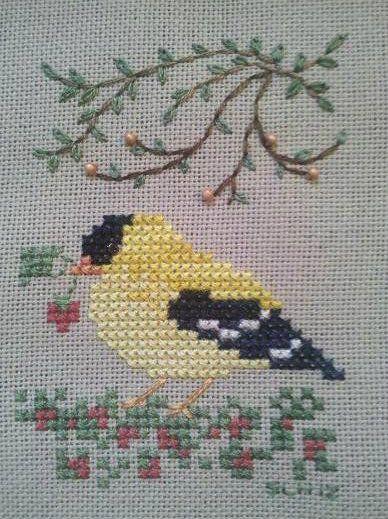 Goldfinch photo Goldfinch-1.jpg