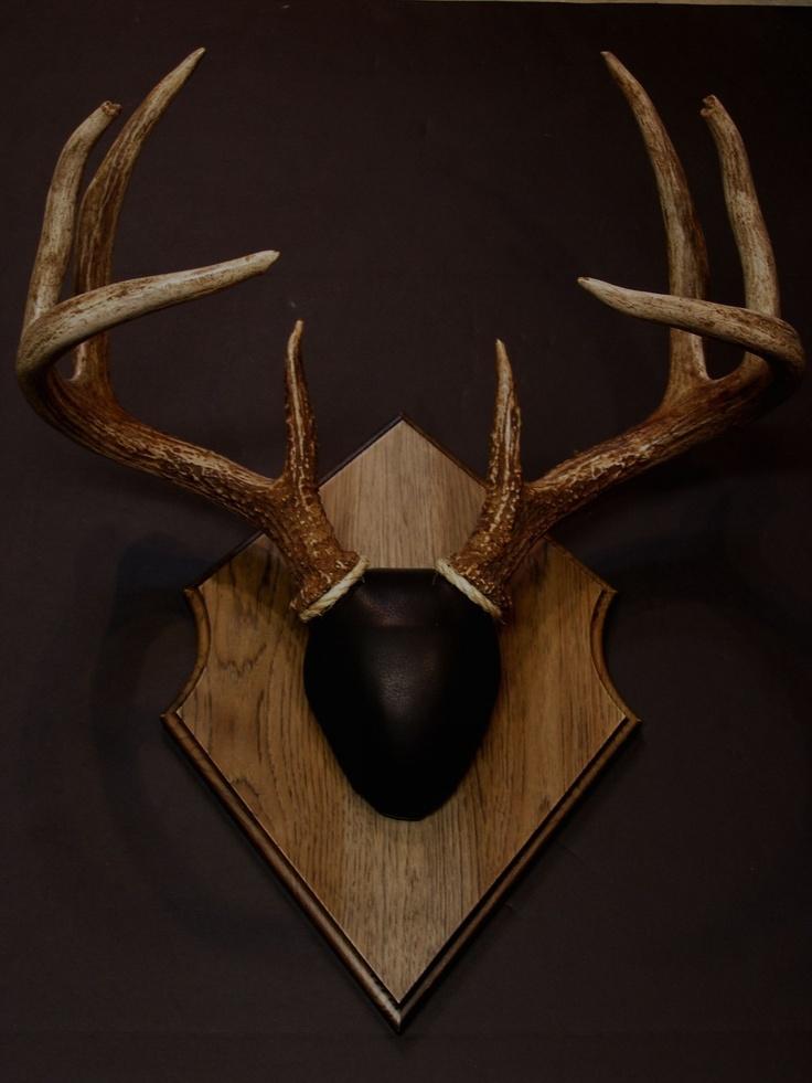 18 best Deer antler Plaques images on Pinterest | Deer ...