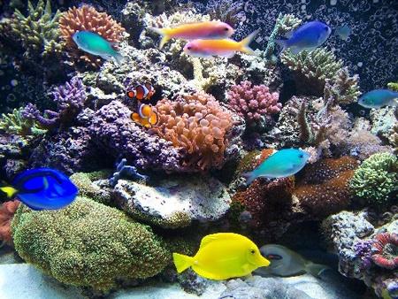 Aquarium Salt vs. Epsom Salts. - Fish Lore Aquarium Fish Forum