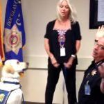 New K-9 Dog Takes His Vows For Police Duty! This Swearing Ceremony Is The Cutest Ever  K-9 Dogs are special dogs who serve the police department! They are smart, intelligent and they have a special mission in their life. Most of all, they areundergo training to serve a special purpose. Not every dog can become a …  [CLICK TO READ MORE]   The post  New K-9 Dog Takes His Vows For Police Duty! This Swearing Ceremony Is The Cutest Ever  appeared first on   .  https://www.dogisto.com/..