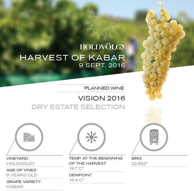 Nemzetközi aranyérmes borunk, a Vision kivételes fűszerességét a kabar szőlő biztosítja. -- The unique spiciness of our international gold medal winner HOLDVÖLGY Vision is provided by the 'kabar' grape variety.  #wine #tokaji