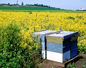 Please visit this site and learn how to make your garden safe for bees