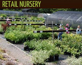 Broken Arrow Nursery source for unusual periennials. Not too far away.