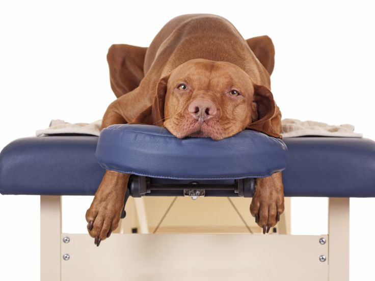 How to Massage Your Dog
