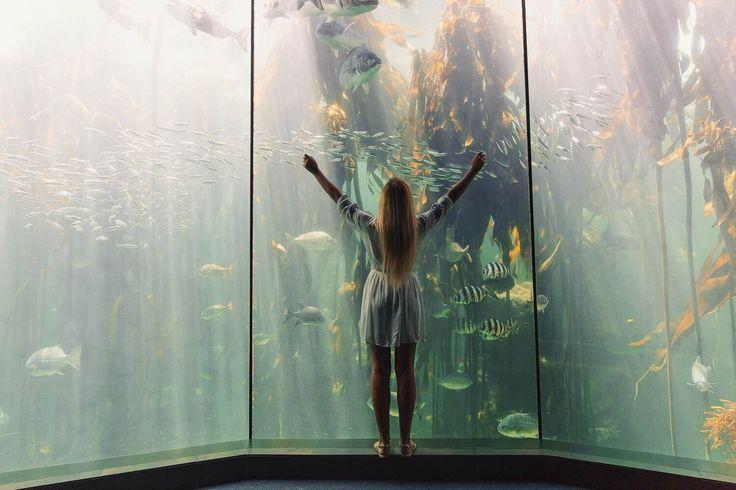 Visit the Two Oceans Aquarium in Cape Town.  #CapeTown