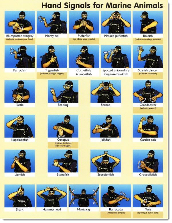 How many do YOU know? - fish signals #scuba #fish #signals