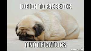 Image result for pug memes