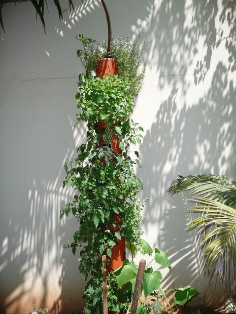 Picture of DIY Organic Vertical Planter