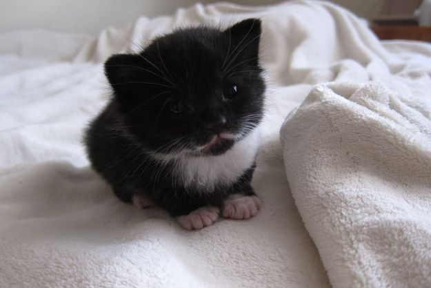 This handsome guy with his teeny mustache. | 39 Overly Adorable Kittens To Brighten Your Day