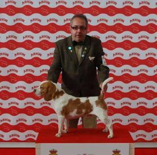 Agustín Fontán, distribuidor especialista de Arion en Pontevedra ha ganado el prestigioso título de #Perro del Año 2013 en Galicia con su #Beagle Almendralejo Do Meco