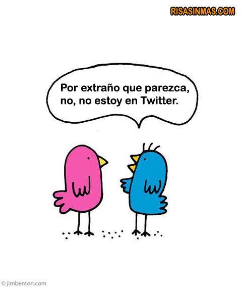 Pájaros hablando de Twitter  #chiste #humor