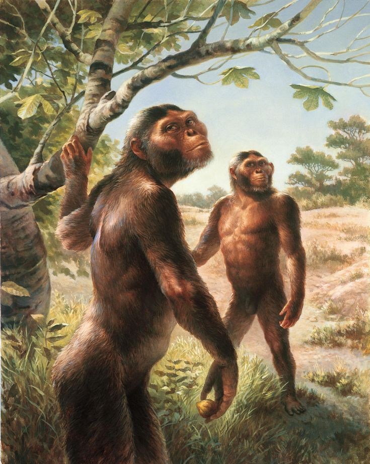 an analysis of the lucy test in the study of human evolution Lucy's legacy: sex and intelligence in human evolution this book provides a review and analysis of modern sociobiology, applied to human evolution in the broadest sense by alison jolly [cambridge.