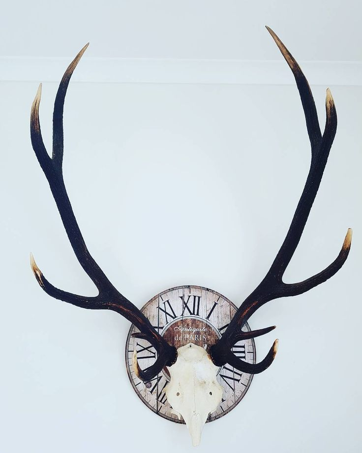 "Hmm...he insisted/persisted/pestered..""look what I made"" #wallartdecor #wallart #deer #stag #hunting #hunt #newzealand #aotearoa http://misstagram.com/ipost/1553594669525791856/?code=BWPeh7iBnRw"