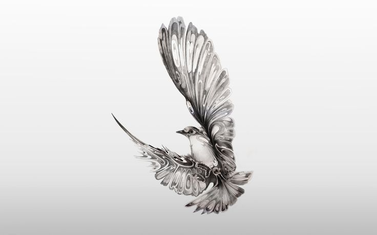 Airborne, Dove by illustrator Si Scott
