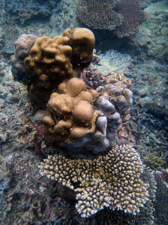 beautiful coral, tidung island, near Jakarta