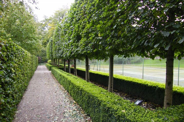 special trees for landscape design | Garden Design ...