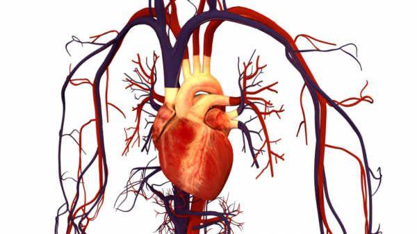 """Científicos de la Universidad de Harvard y del Children's Hospital de Boston, Estados Unidos, desarrollaron una manga robótica que se ajusta sobre el corazón y bombea como el órgano mismo. El invento compuesto por """"músculos"""" de silicona busca ser una solución para pacientes que pueden sufrir paros cardíacos.Para comprobar su funcionamiento, los investigadores indujeron químicamente el paro cardíaco en cerdos que llevaban el dispositivo para luego controlaron sus latidos.Trabajan..."""