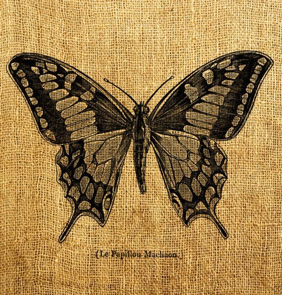Download image Vintage Butterfly Tattoo PC Android iPhone and iPad ...