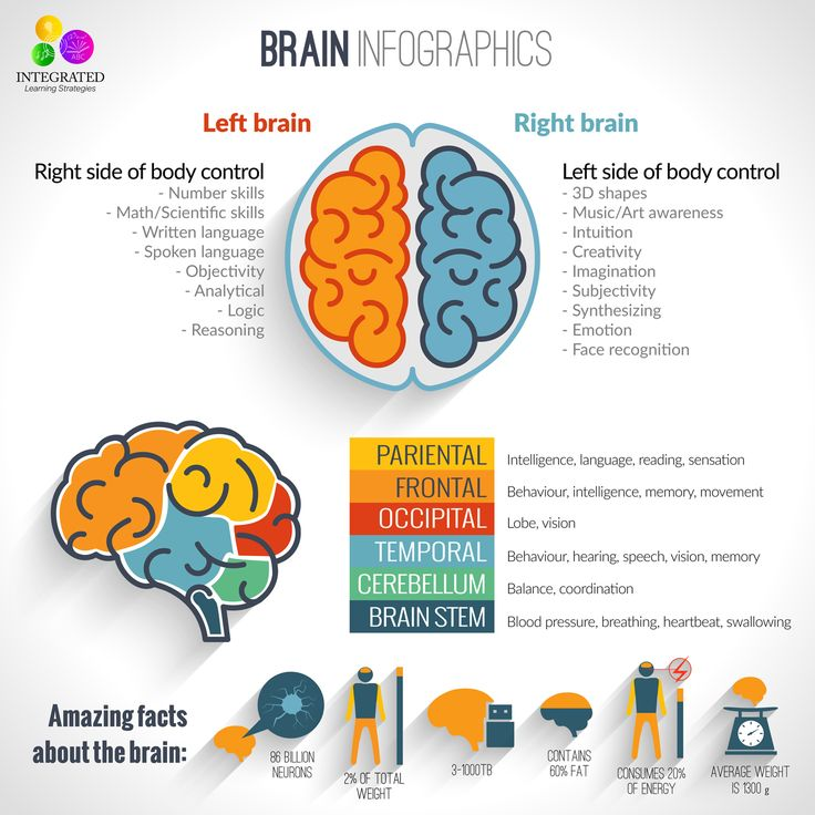 Best 25 Brain Diagram Ideas On Pinterest Diagram Of The