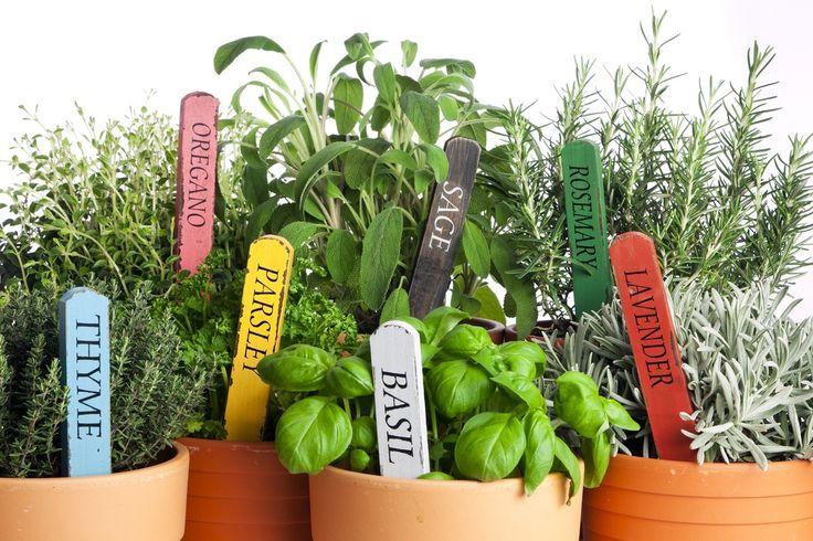 Here's 5 reasons you should start a herb garden! #Gardening #GrowYourOwn https://www.trulawn.co.uk/news/5-reasons-start-herb-garden/?utm_campaign=coschedule&utm_source=pinterest&utm_medium=Trulawn%20Artificial%20Grass&utm_content=5%20reasons%20why%20you%20should%20start%20a%20herb%20garden