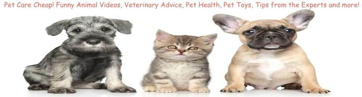 Exactly how Do You Become a Veterinarian? It's the think of many youthful folks ... making use of pets plus conserving lives inside the job. - http://petcarecheap.com/exactly-how-do-you-become-a-veterinarianits-the-think-of-many-youthful-folks-making-use-of-pets-plus-conserving-lives-inside-the-job/