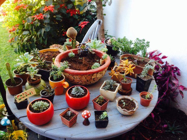 Mi mesa favorita de cactus y suculentas!