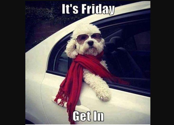 It S Friday Friday Got To Meme Down On Friday Leuke Honden Grappige Dieren Grappig