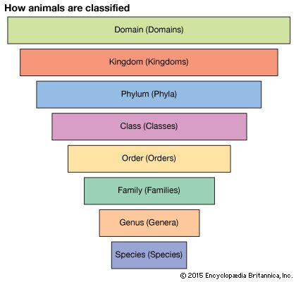 biological classification: Scientists place animals, plants, and other living things in a system of groups. Living things within a group have a number of features in common.