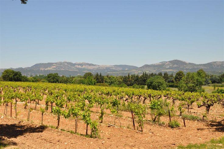 Rode wijnen - De Lekkere wijnen van Domaine de Marotte