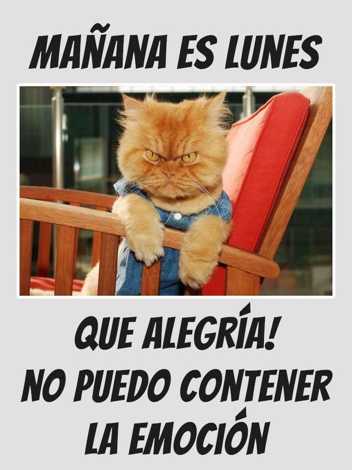 Pin By Melly Segovia On Pensamientos Y Mas Funny Spanish Memes Work Humor Humor