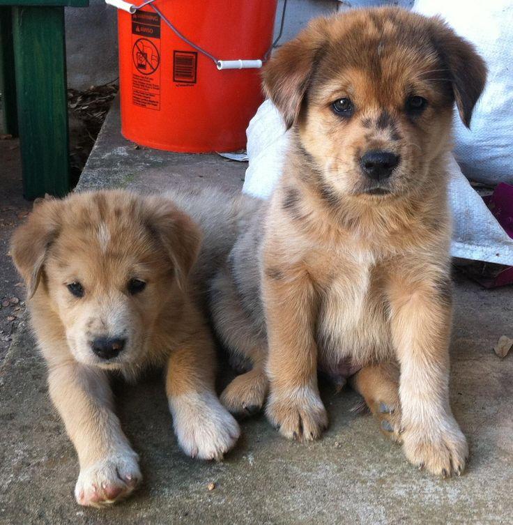 Golden Huskies http://ift.tt/2as1Sx0