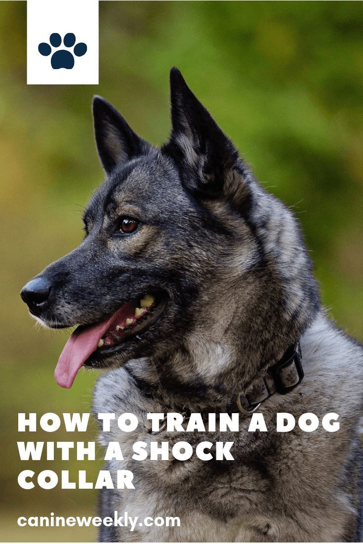 How to train a dog with a shock collar shock collars can