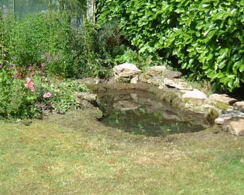 66 Best I D Like A Pond Images On Pinterest Backyard 400 x 300