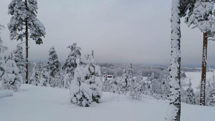 Feb 5th 2015 in southeastern Finland, Uudenkylän harju view from skiing track