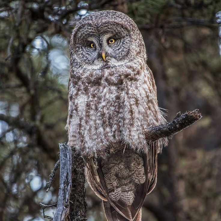 17 Best Ideas About Owl About Me On Pinterest Owl Theme