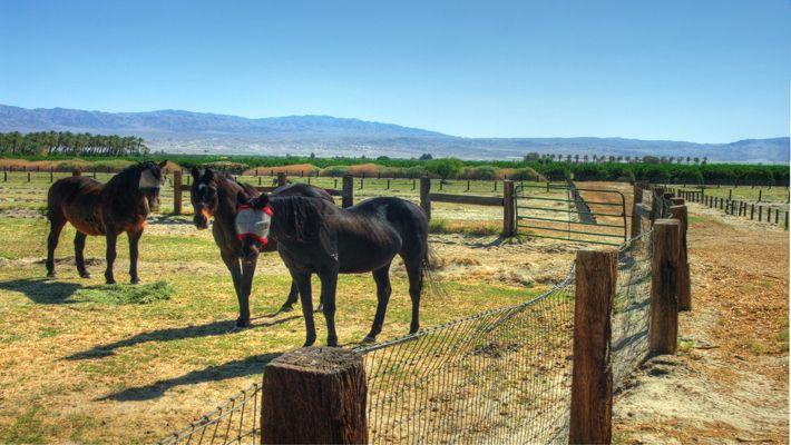 52855 Jackson St.  Coachella, CA.  Boarding Farm  $75,000/acre