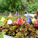 Farbe: rot Mit Blumen Freude bereiten. Wunderschöne, von Hand gefertigte Glockenblume/Keramikblume, ein zauberhafter Schmuck für Ihr Heim. Die Blüten habe ich liebevoll aus einzelnen...