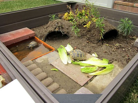 Outdoor Turtle Habitat. Would need some modifications to prevent escapees and predators but very interesting