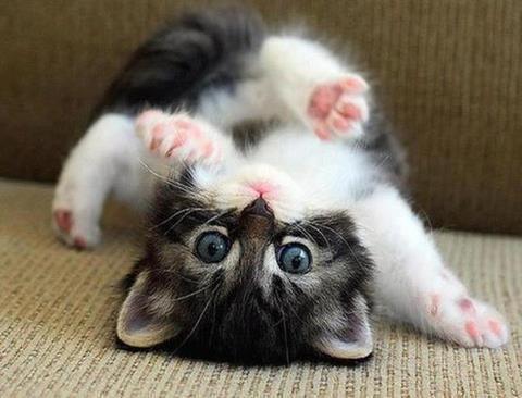 kitten: Kitty Cat, Pet, Yoga Poses, Cute Cat, Babycat, Cute Kittens, Kittycat, Animal, Baby Cat
