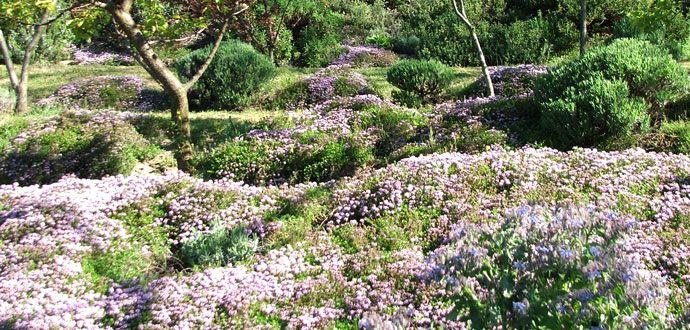 http://www.giardinovivaiolavalletta.it/piante-tappezzanti/