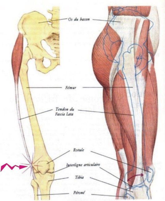 Tendinite du fascia lata tfl anatomy pinterest for Douleur interieur du pied