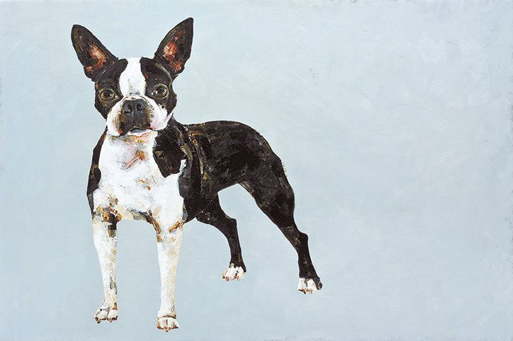 Constance-bachmann-boston-terrierthe-book-of-the-dog-its-nice-that