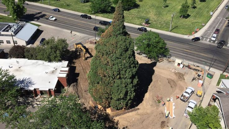 Workers in Boise, Idaho, will attempt to move a massive sequoia tree that's in the way of a downtown hospital's expansion plans. The 10-story tall tree was sent to Boise as a small seedling by natural John Muir more than 100 years ago. On Friday workers will begin moving it two blocks to a...