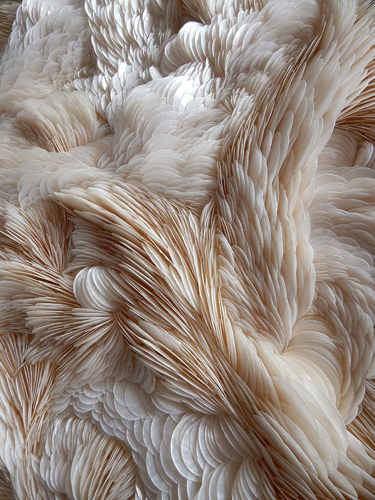 This design element is texture. This looks like it would feel very soft, and smooth like feathers. The image is so clear it makes it look like you can practically feel it on your hands.