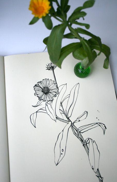 17 best images about calendula on Pinterest Calendula Flower Drawing