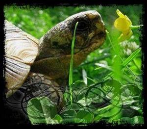 L'alimentation d'une tortue!