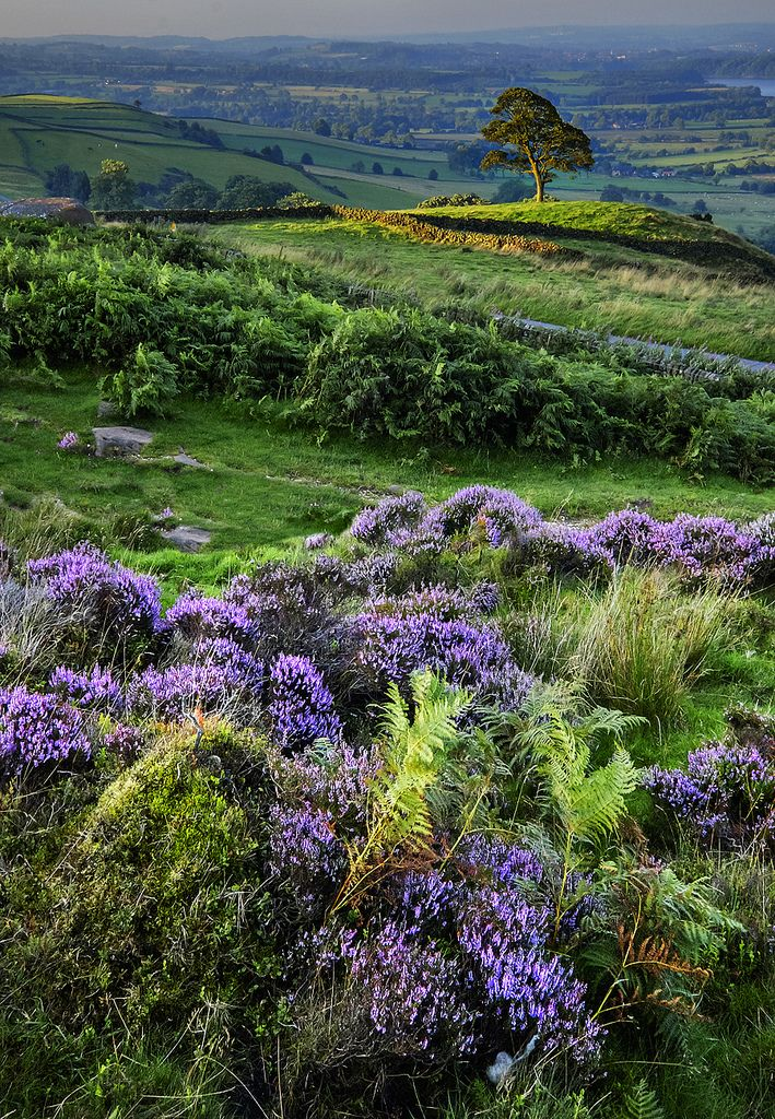 The Roaches, Staffordshire, England