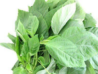 【モロヘイヤの栄養と効果は?】栄養価の高い緑黄色野菜の一種で、β-カロテンをはじめビタミンC、カルシウム、カリウム、鉄などのビタミン類・ミネラル類が豊富に含まれてる。他にも若返りのビタミンといわれているビタミンEやビタミンK、粘りの成分であるムチンやマンナンが豊富。