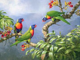 Supporter of WAMA- Wildlife Art Museum of Australia. © William (Bill) Cooper AO - Rainbow Lorikeets